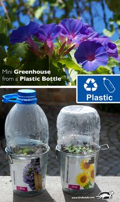 Mini Greenhouse from a Plastic Bottle