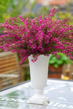 Bouquet of flowers Beautiful Flower Arrangements, Floral Arrangements, Types Of Flowers, Beautiful Flowers, Floral Wedding, Wedding Flowers, Vases, Australian Native Flowers, Gift Bouquet