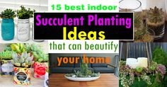 Growing succulents indoors can add a touch of beauty to your home. Also, they are easy to grow. Check out these 15 Best Indoor Succulent Planting Ideas for inspiration!
