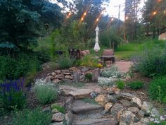 Evergreen cottage garden