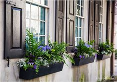 Portrait location: Use the gorgeous scenery throughout downtown Charleston as the backdrop.  Here we have black shutters on windows with pretty flower boxes hanging beneath in Charleston, South Carolina- April O'Hare Photography http://www.apriloharephotography.com