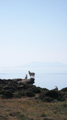 Apigania, Tinos. Greece.