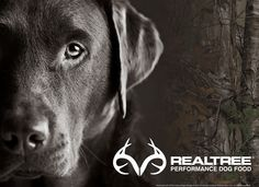 hunting dog wallpaper 52764   dzone
