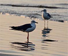 The polluted beach affects these sea birds- photo by FARAH KAMAL Clifton Beach, Sea Birds, Environment, Earth, Popular, Life, Animals, Animais, Animales