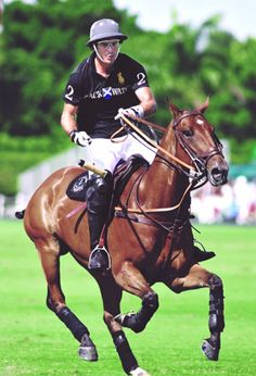 the polo ponies of nacho figueras -the muscle definition of polo ponies always amazes me
