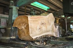 Sawing Cedar of Lebanon ~ Hearne Hardwoods Inc.