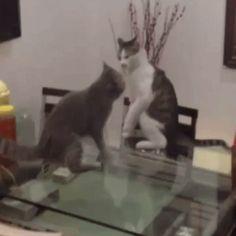 Cat's wrestling