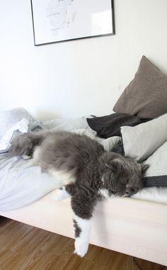 Zzzzzzz - the rare photo of a cat sleeping :) Cute Cats, Funny Cats, Funny Animals, Cute Animals, Neko, Curious Cat, Sleepy Cat, Cat Sleeping, Domestic Cat