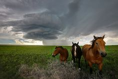 """https://flic.kr/p/tQB8wx 