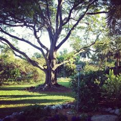 sarasota garden club   Sarasota Garden Club - love the bird house.