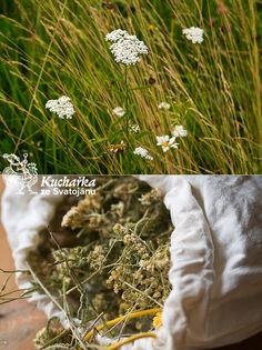 Kuchařka ze Svatojánu - bylinky