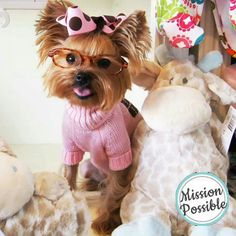 Ok so I am a Yorkie who loves fashion. Check out my new glasses, don't you think I look smart?