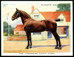 Cigarette Card - Yorkshire Coach Horse