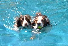 Springers doing what they love!