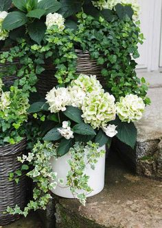 Container Gardening Ideas - 4 Ways to Create Beautiful Pots Potted Plants Patio, Outdoor Plants, Garden Planters, Succulents Garden, Outdoor Gardens, Planting Flowers, Container Flowers, Container Plants, Container Gardening