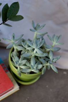 Succulent Care: The Secret to Keeping Them Alive