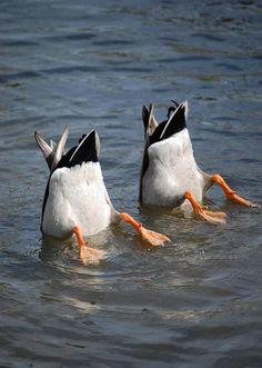 Synchronized swimming team ha ha ha