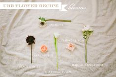 Flower Friday Recipe: Centerpiece With Tinge Floral -