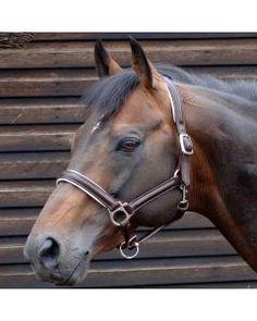 c0d0ecc72db18 Caldene Leather Padded Headcollar Havana Pferde Halfter