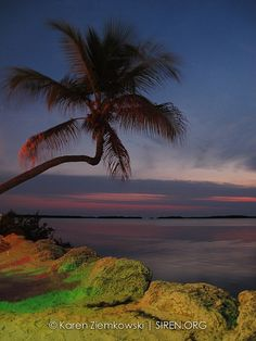 Florida Keys - palm tree and sunsets. Love this lifestyle and view!