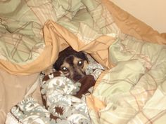 """This was me this morning. """"I'm cold, I dont want to go to work."""""""