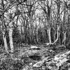 Dense dense dense #bw #blackandwhite #forest #trees #Shenandoah #texture #abstract