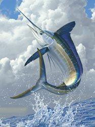 """White Marlin"""