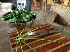 how to cut papaya leaves to make a cure for dengue and chikungunya