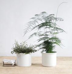 Spargelkraut (Asparagus densiflorus)[Asparagus densiflorus]Wer keinen Platz für ausladende Pflanzen hat, kann versuchen, sein Heim mit Minifauna aufzuhübschen und auf das Spargelkraut setzen. Super delikat, Licht und Wasser liebend ist das zarte Pflänzchen easy zu handlen.  #refinery29 http://www.refinery29.de/pflanzen-fuer-zuhause-die-nicht-sterben#slide-6