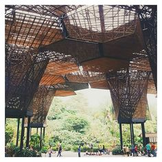 Fairly typical for a landscape architect to visit a city's botanic gardens... this is the Orquideorama in Medellin Botanical Gardens (designed by Plan B + JPRCR) // #whenincolombia #orquideorama #garden #landscape #architecture #pavilion #planthouse #structure #inspo #colombia #steel #timber #landscapearchitecture #medellin #hexagon #design 📷@lou_cust