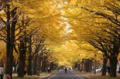 Hokkaido Univ. @Sapporo Oh