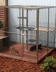 best ideas about Cat Enclosure Outdoor Cat Pen, Outdoor Cat Enclosure, Bird Cage Design, Pet Bird Cage, Cat Kennel, Baby Raccoon, Cat Cages, Cat Shelves, Cat Condo
