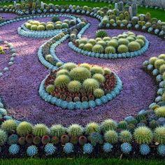 beautiful cactus garden!