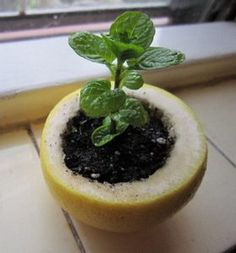 6 Start A Seedling In A Lemon Peel And Then Transplant The Whole Thing Into The Garden