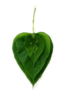 leaves (mary jo hoffman)