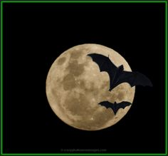 free halloween stock image of full moon black sky and two bats, creative commons license Halloween Photos, Vintage Halloween, Halloween Fun, Halloween Clothes, Costume Halloween, Bat Photos, Creepy, Scary, Moon Dance