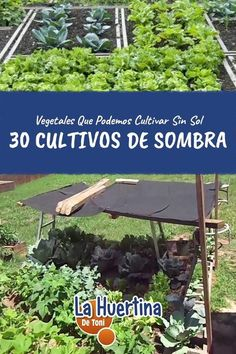 Hydroponic Growing Systems – The Tilled Garden Hydroponic Farming, Hydroponic Growing, Permaculture, Hydroponics, Aquaponics Supplies, Aquaponics System, Vertical Farming, Urban Farming, Trees To Plant