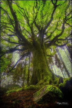 ponthus | Une nouvelle image du hêtre de Ponthus !! Malheur… | Flickr - Photo Sharing!