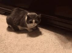 Cat Getting A Treat http://everythingfunny.org