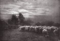 Die Kunst in der Photographie : 1908 Photographer: Léonard Misonne Title: Coucher de Soleil