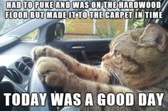 This Was My Cat! :)