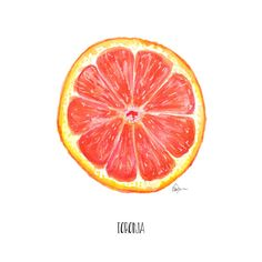 Ruby Red Grapefruit Watercolor Painting Food by KariSketches