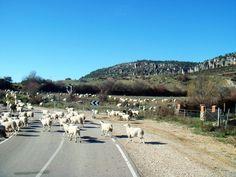 El paisaje nos engulle cada día, hoy, las ovejas nos salen al paso