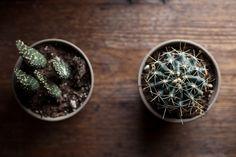 Cactus -★-