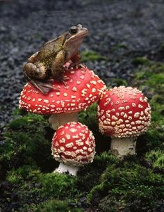 Another toad on a toadstool <3