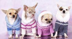 Sueter para perro  Instrucciones para todas las tallas en el enlace  http://kena.com/aprende-a-hacer-un-sueter-tejido-para-tu-perro#
