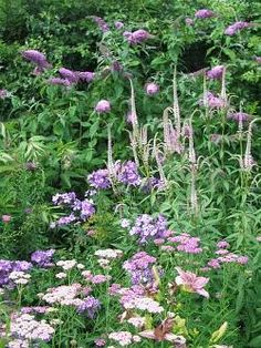 Achillea 'Cerise Queen', Phlox 'Blue Paradise', with Veronicastrum 'Pink Glow' and a pink Buddleia in the background and, in the foreground, a lilac pink Hemerocallis.