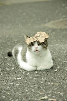 Silly kitty has a leaf hat