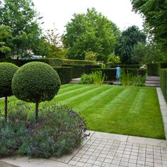 clipped hedges, lawn border by stone, lavender under clipped Buxus topiary lollipops - Landform Consultants - Richmond Garden Hedges, Topiary Garden, Love Garden, Summer Garden, Landscaping Supplies, Garden Landscaping, Back Gardens, Outdoor Gardens, Modern Gardens