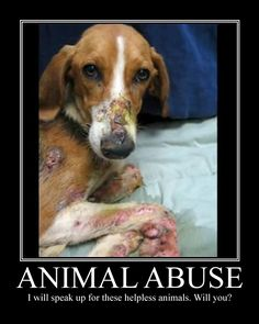 i have made an orginization called the UN ANIMAL ABUSE CLUB. The UN ANIMAL ABUSE CLUB will save the animals like the one in this picture. Who is with me on destroying animal abuse once and for all! Animal Abuse Statistics, Save Animals, Animals And Pets, Beagle, Amor Animal, Stop Animal Cruelty, Animal Welfare, Animal Rights, My Heart Is Breaking